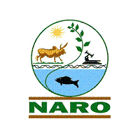 NARO MAKES BIODEGRADABLE KAVERA FROM CASSAVA CHIPS